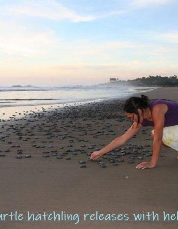 Playa Las Tortugas Prime Rentals